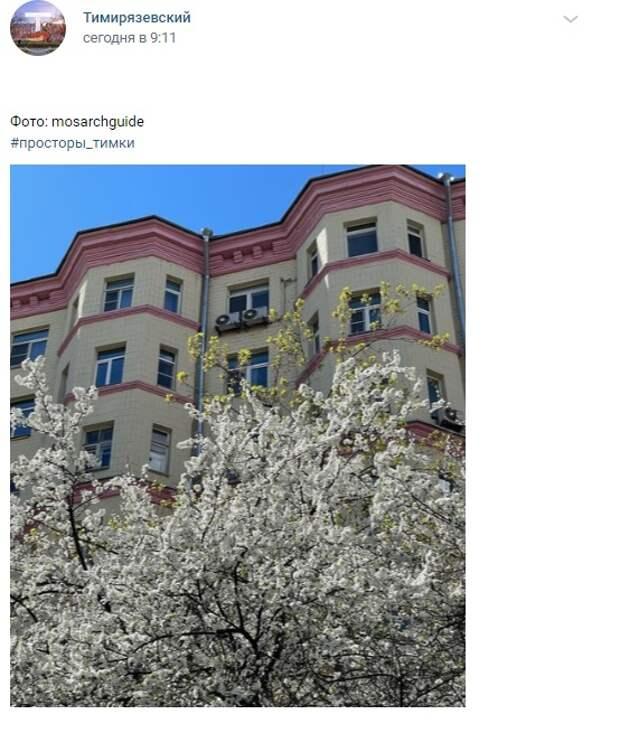 Фото дня: цветущий Тимирязевский