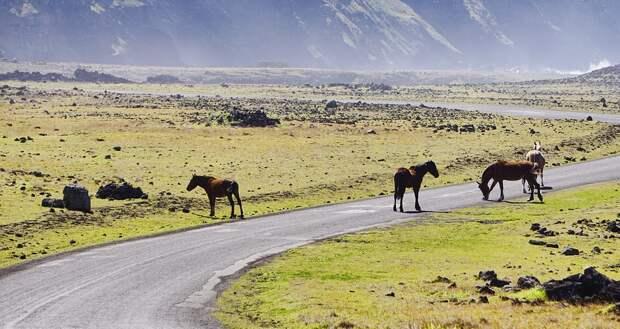 29 млн га пастбищ не хватает в Казахстане