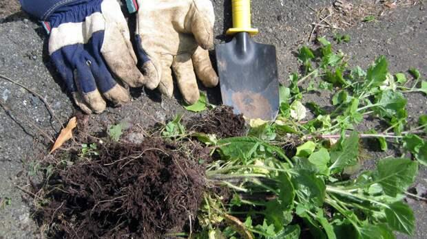 Природные убийцы сорняков делают садоводство безопасным и легким