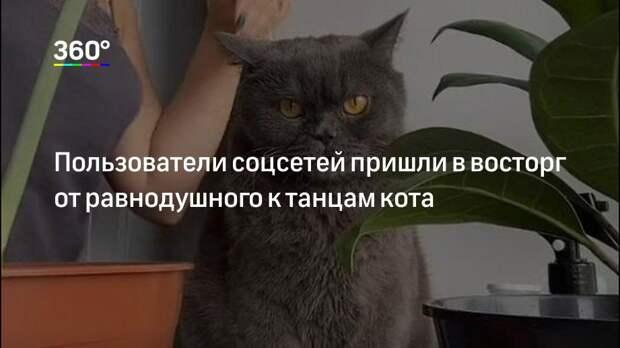 Пользователи соцсетей пришли в восторг от равнодушного к танцам кота
