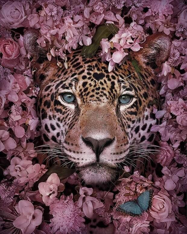 Великолепные портреты животных от Андреаса Хэггквиста с очень важным посланием