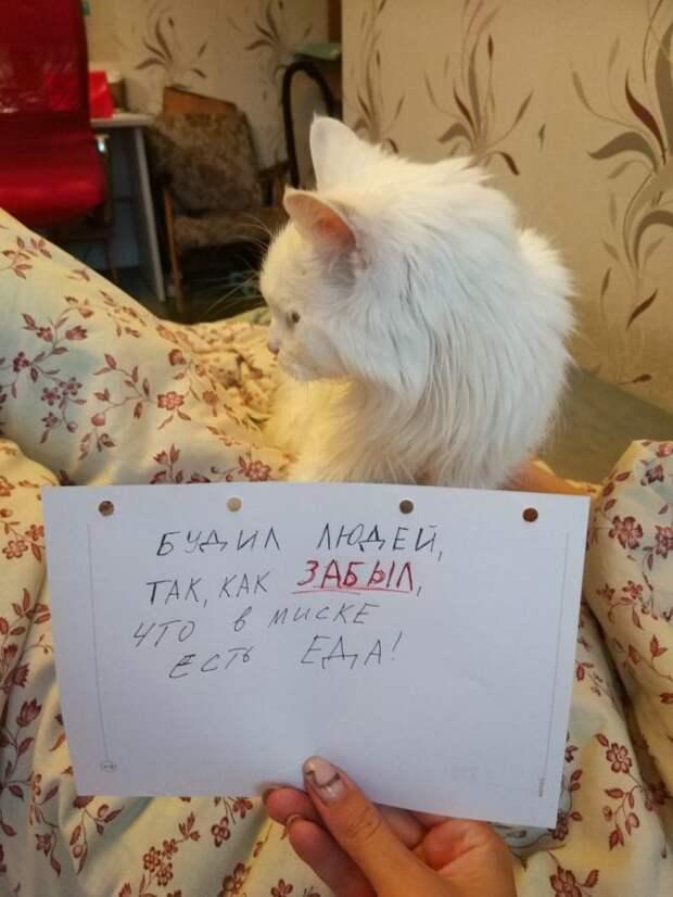 белый кот с запиской