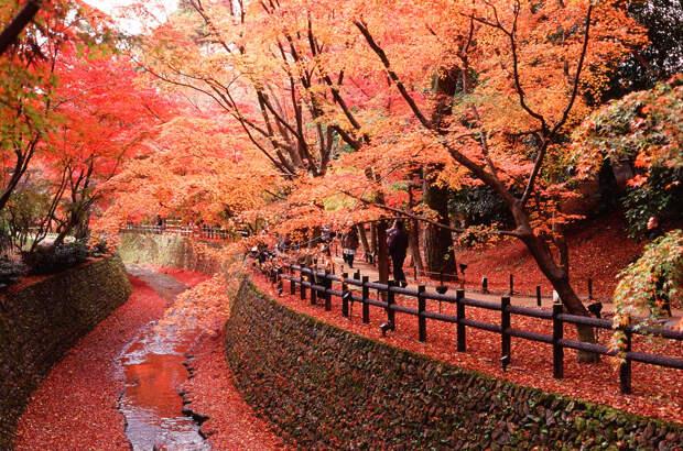 Осень. (Wunkai)