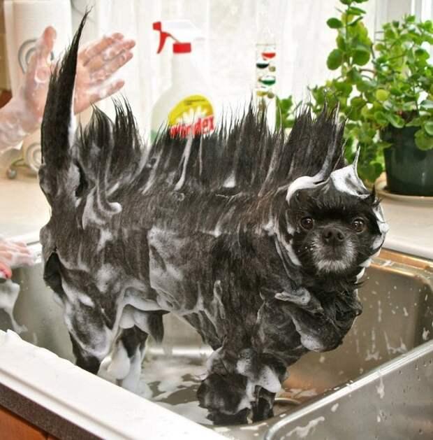 Видеоподборка веселого купания собак