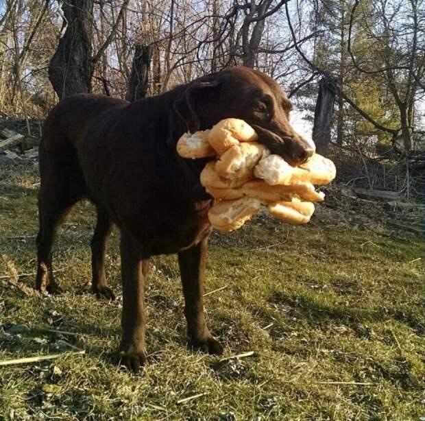 Наш пёс украл все булки для пикника