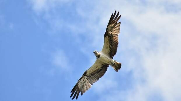 Самые быстрые в мире птицы установили новый рекорд скорости полета
