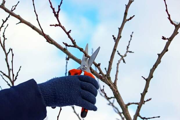 Обрезка деревьев: не упустите сроки!