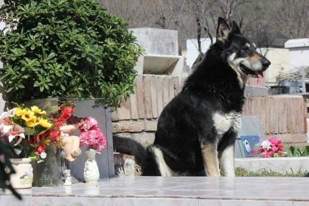 После просмотра этих фотографий вам непременно захочется завести собаку