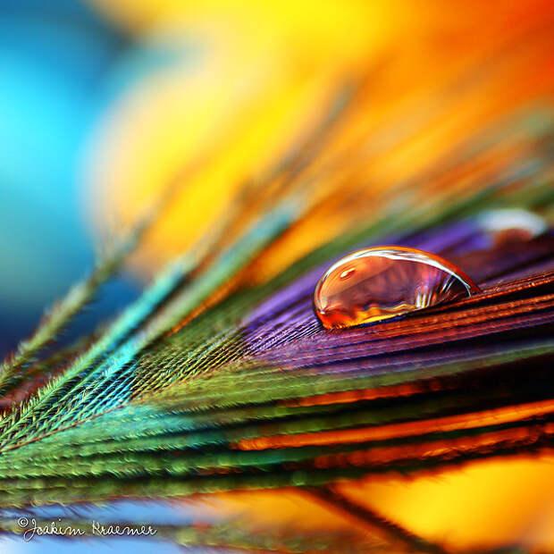 ФОТОВЫСТАВКА. Joakim Kraemer: очарование цветов