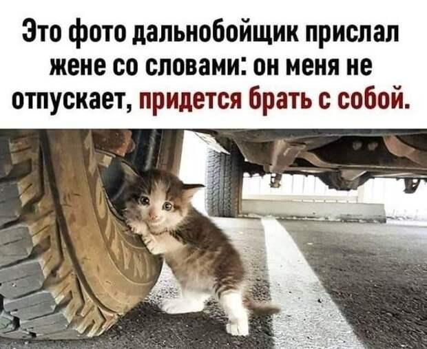 Однажды я принес на работу бездомного щенка, ...и полетели к моим ногам человеческие маски...