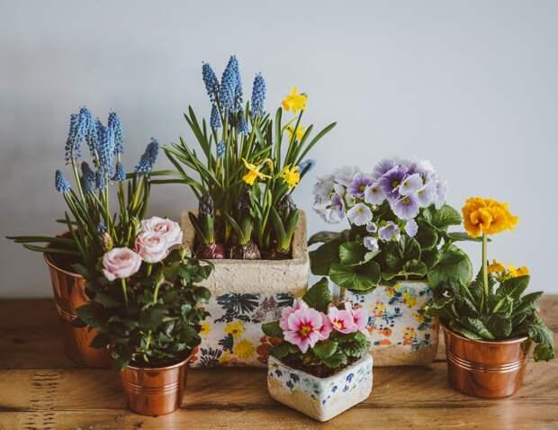 Растения с коротким сроком жизни