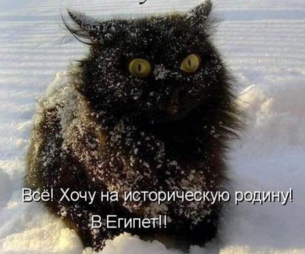 81121594_kotomatrica_egipet