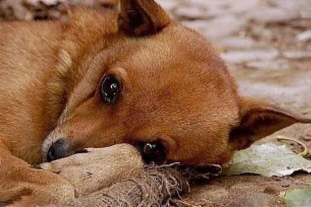 Бог смотрит на людей глазами собак