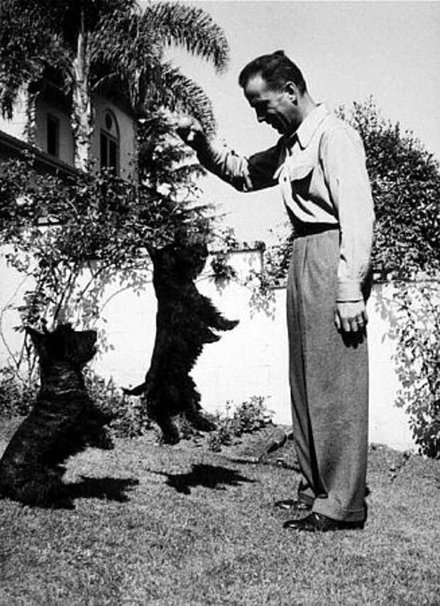 115 лет со дня рождения Хамфри Богарта.