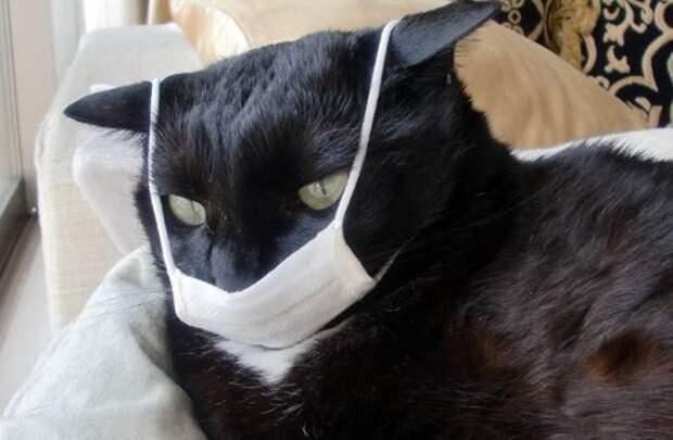 Терпи, Мяо! Фото кота в защитной маске не по размеру стало вирусным