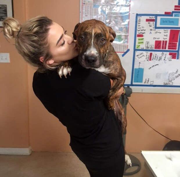 Он обречён, но счастлив… Девушка подарила Дом и Любовь смертельно больному псу