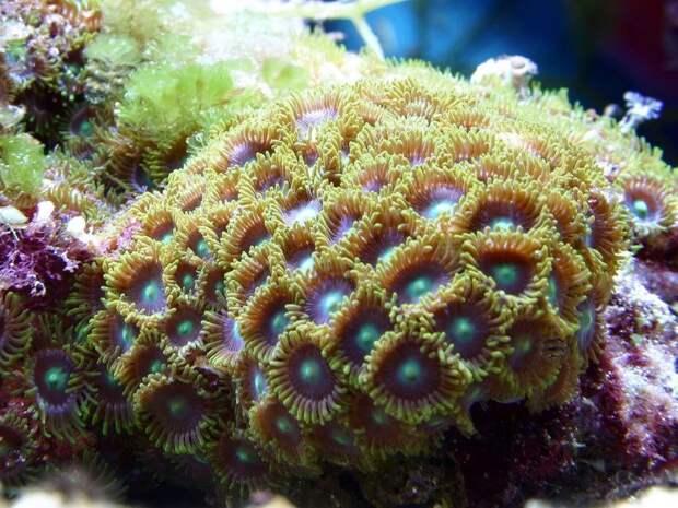 Коралл-убийца: мать четверых детей чуть неумерла ототравления после чистки аквариума