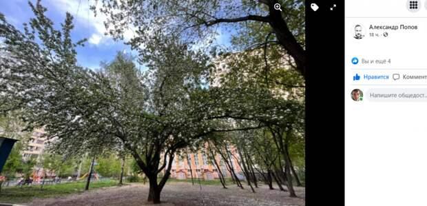 Фото дня: яблоня в цвету на Маломосковской