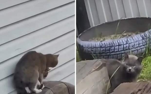 «Это не то, о чем ты подумала»: кошка поймала кота на измене