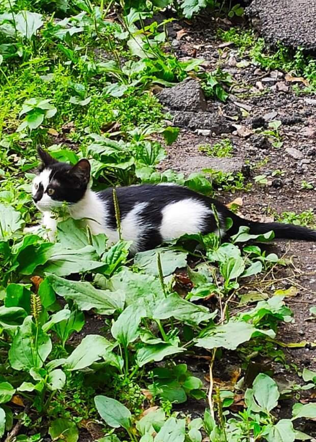 В тех дворах регулярно травят кошек, зачищая подвалы... Помогите!!! Котятам там не выжить!!!