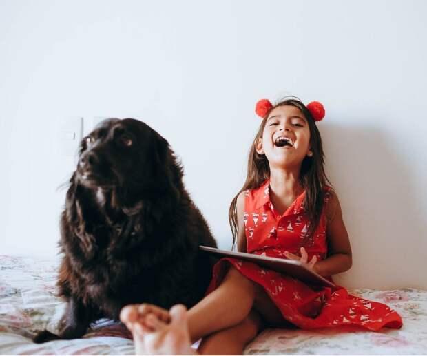 Почему ребенок важнее собаки