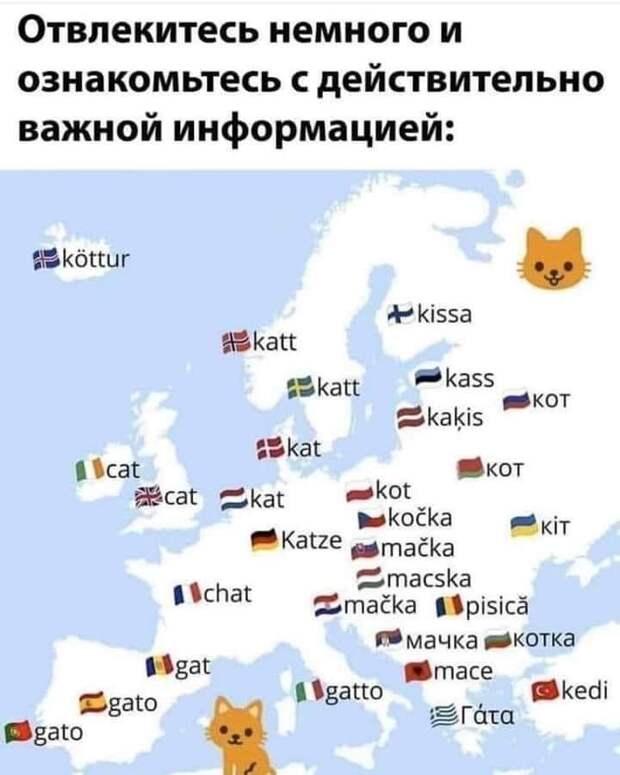 Как называют котов в разных странах