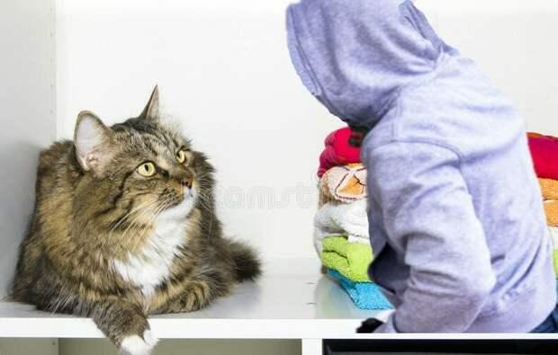 Не ожидали домушники, что в шкафу любил поспать кот Барсик
