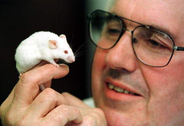 Делягин: Российский доцент стоит столько же, сколько американская лабораторная мышь