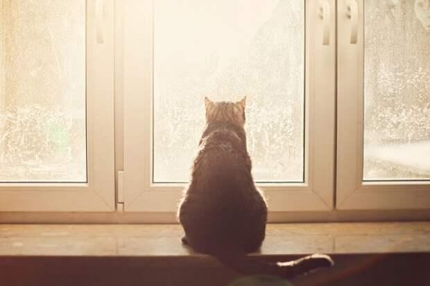 7238460-R3L8T8D-650-cat-waiting-window-9