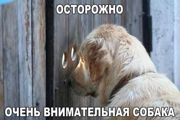 Картинки по запросу фото снадписью