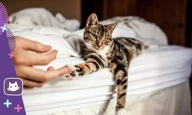 Почему кошки спят с хозяином...