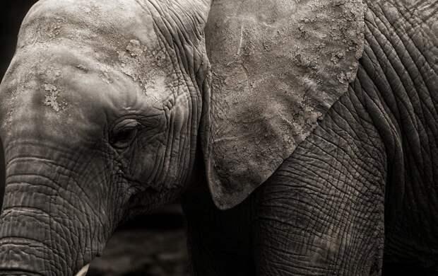 Впервые в истории. Суд в США рассмотрит иск слонихи против зоопарка