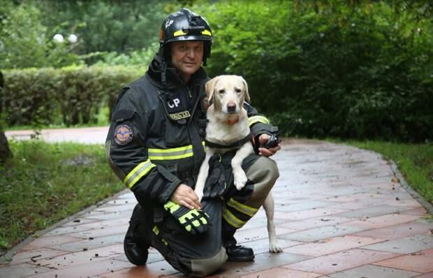 Спасти котенка в Бибиреве помогла собака