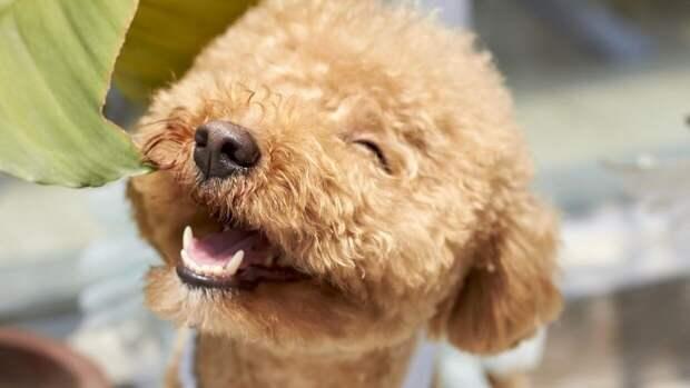 Кинолог рассказал, какие собаки не переносят жаркую погоду