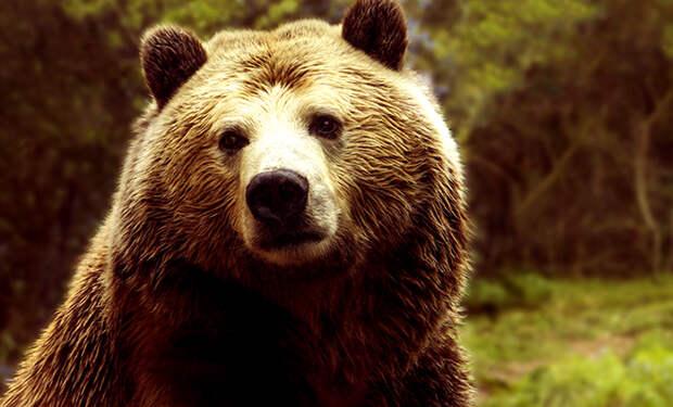 Медведь решил влезть на участок, но хозяйка была на страже и дала непрошеному гостю отпор. Видео