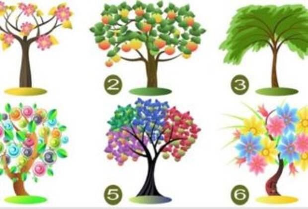 Выберите дерево и узнаете, что руководит вашими поступками
