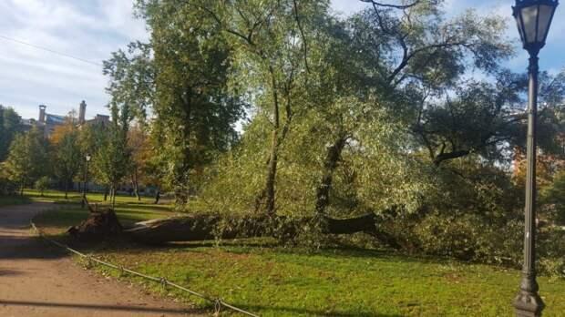 Упавшее дерево насмерть придавило пенсионерку в Подмосковье