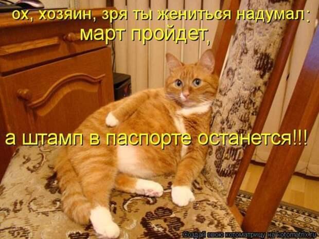 Кошачьи сплетни