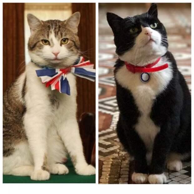 Почему мои коты сочувствуют королевским корги?