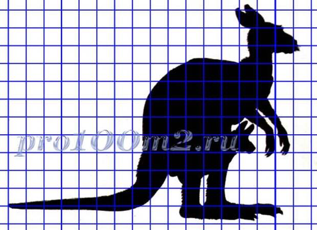 Силут кенгуру